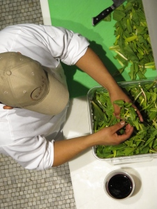 Preparing seasonal ramps at Eataly